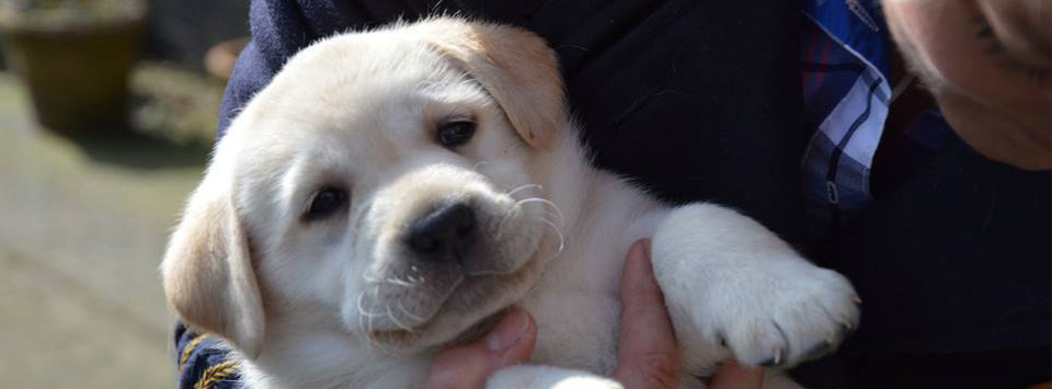 Puppy - Fertiliteitskliniek en progesterontesten